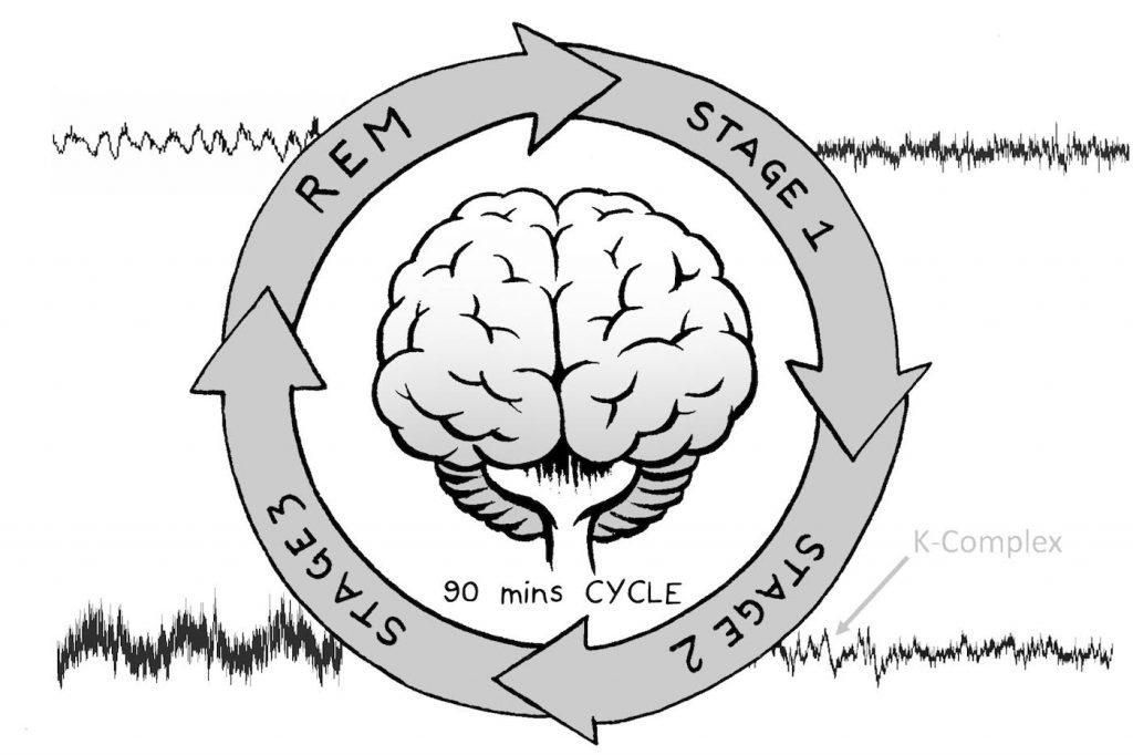 مراحل چرخه خواب
